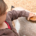 Victoria Pick: Beacon Hill Children's Farm