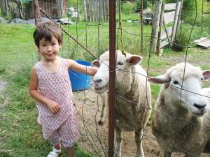 petting sheep on a family trip to quadra island