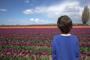taking kids to the tulip fields