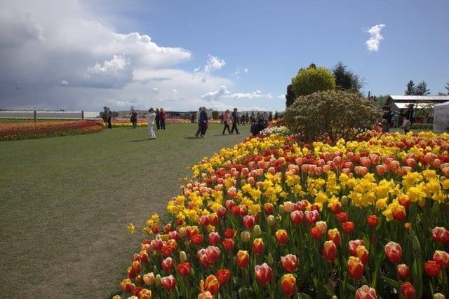 Roozengaarde show gardens